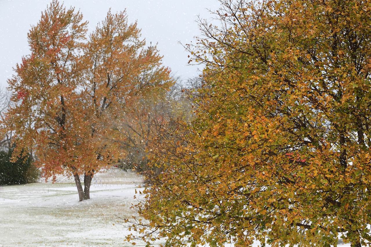 First snow in Ovid (photo)